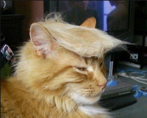 gatto-trump